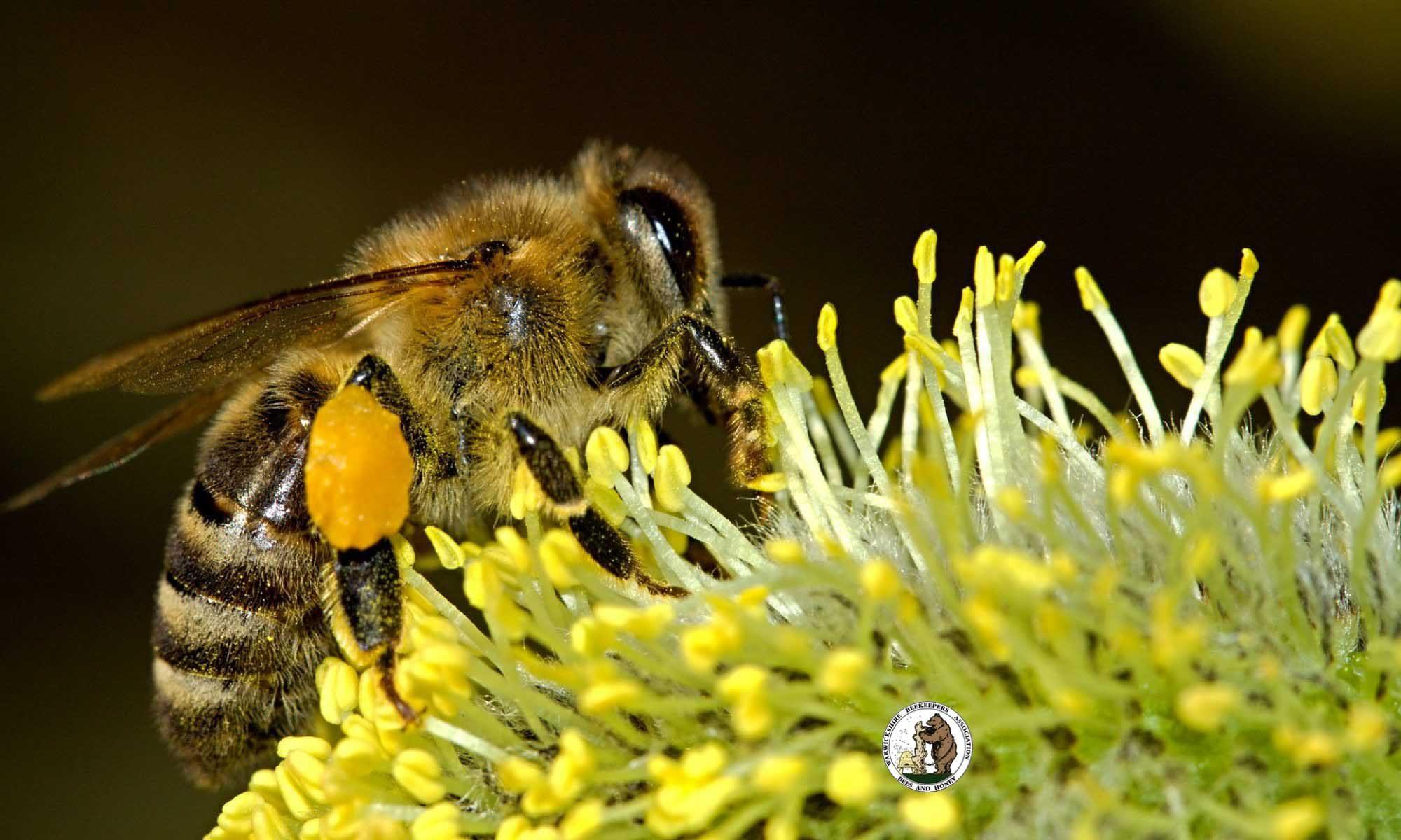 Warwickshire Beekeepers Association