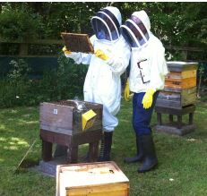 Introduction to Beekeeping @ Kinghill Nursery